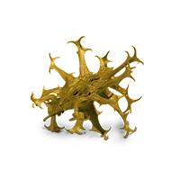 L'harpagophytum, ingrédient et composition Argel7®